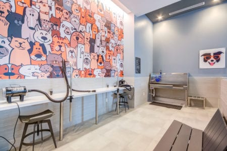 pet friendly apartments silver spring thayer and spring pet grooming